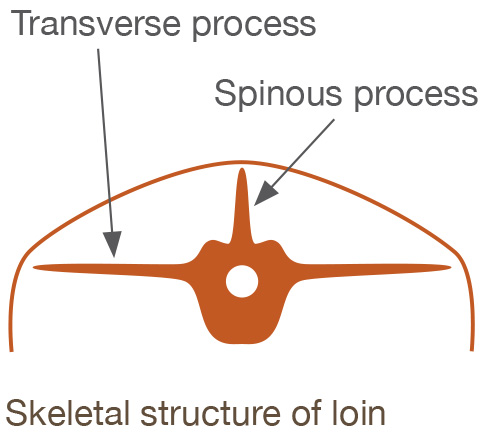 Transverse process - skeletal structure of the loin.