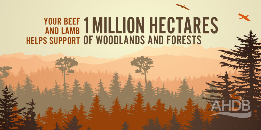 Your beef and lamb helps support 1 million hectares of woodlands and forests. Source: https://www.gov.uk/government/statistical-data-sets/structure-of-the-agricultural-industry-in-england-and-the-uk-at-june