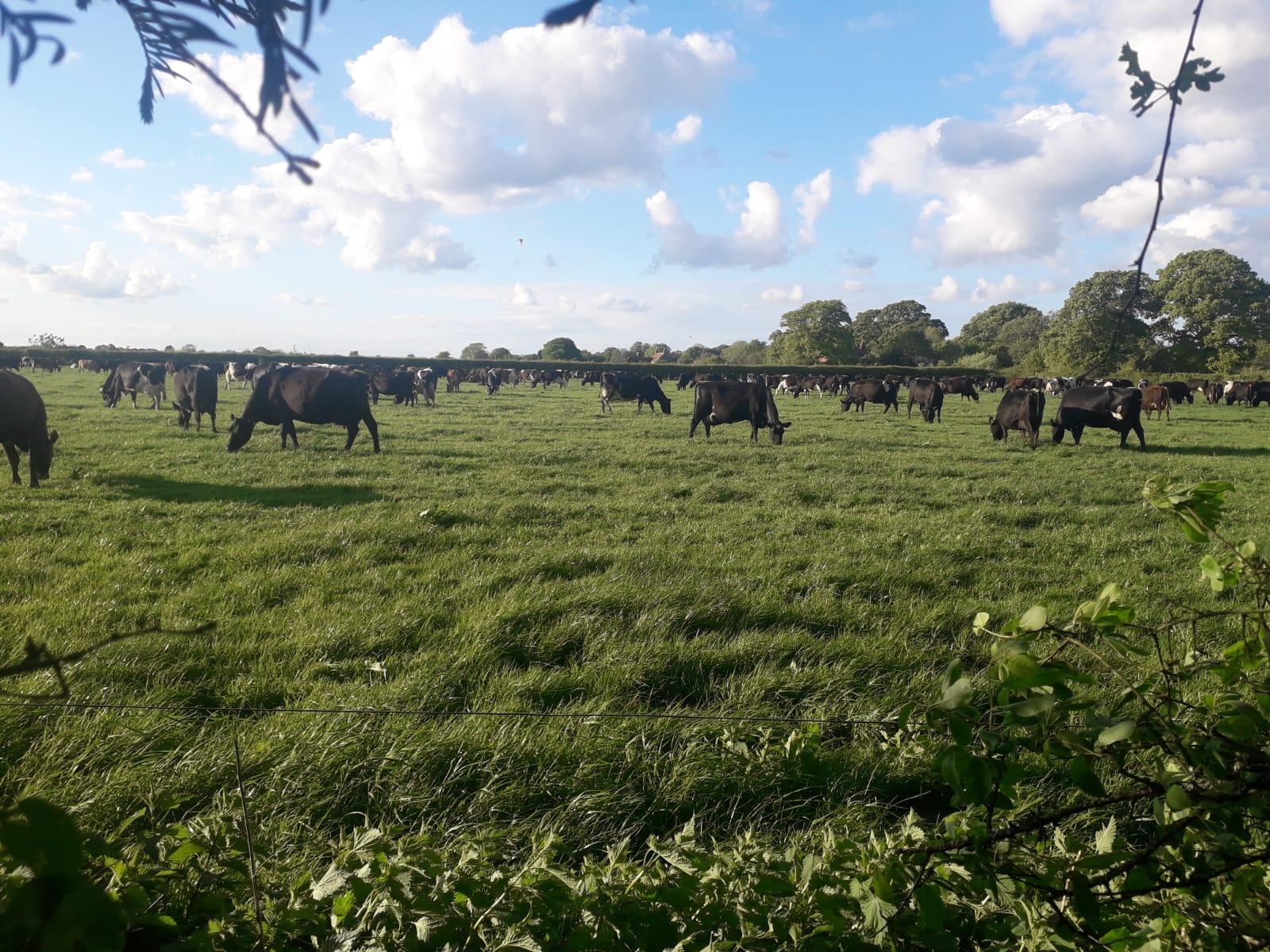 a herd of horses grazing in a field