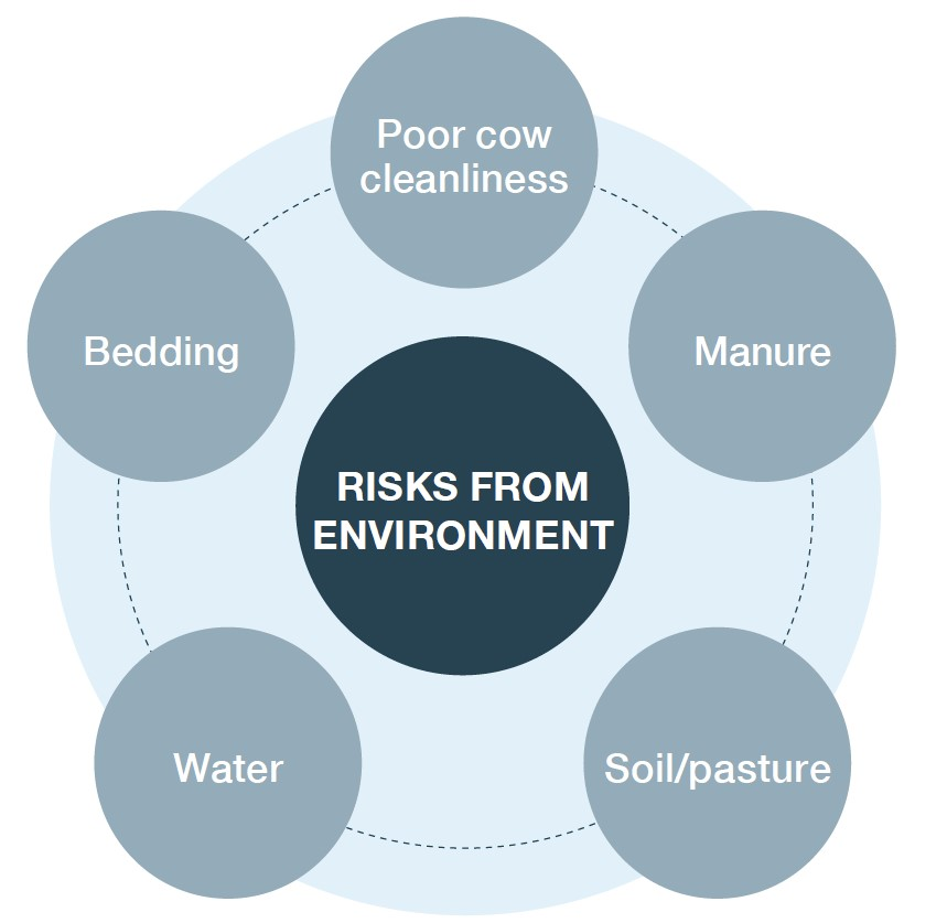 Risks from the environment graphic. Shows poor cow cleanliness, manure, bedding, soil/pasture and water are risks.