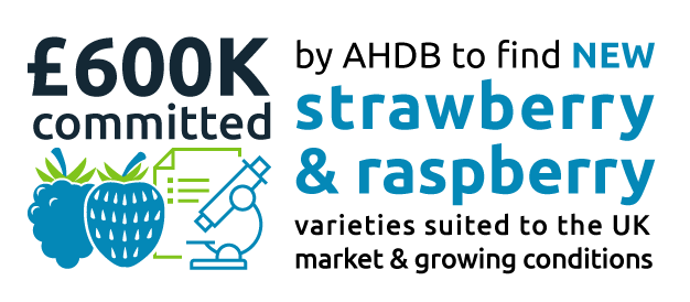 by AHDB to find NEW. committed Strawberry.