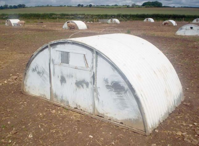 Farrowing arc painting white to reflect sunlight and reduce temperatures inside.