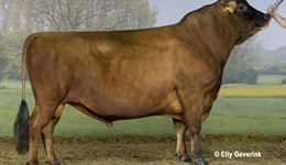 Wide choices across the breeds for spring calving herds