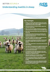 Understanding mastitis in sheep
