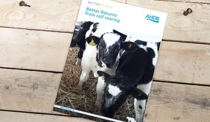 Better Returns from calf rearing | AHDB