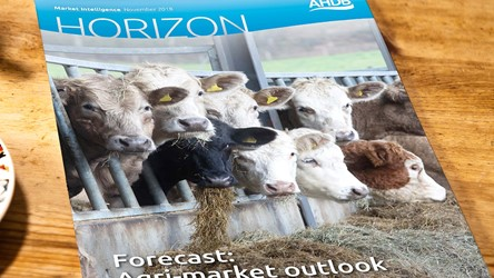 Forecast: Agri-market outlook