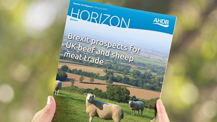Brexit prospects for UK beef and sheep meat trade
