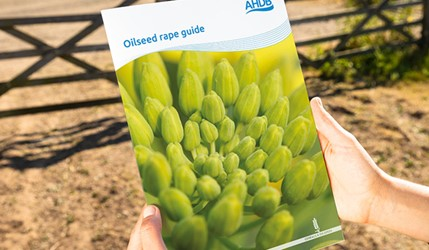 Oilseed rape guide