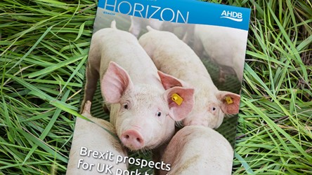 Brexit prospects for UK pork trade