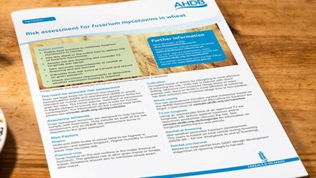Risk assessment for fusarium mycotoxins in wheat