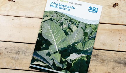 Using brassicas for Better Returns