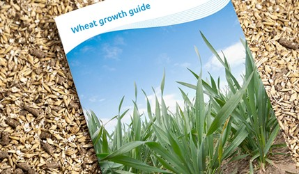 Wheat growth guide