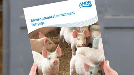 Environmental enrichment for pigs