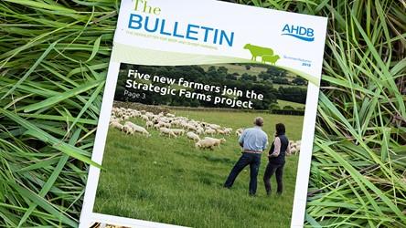 The Bulletin - Summer 2019