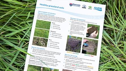 Healthy grassland soils
