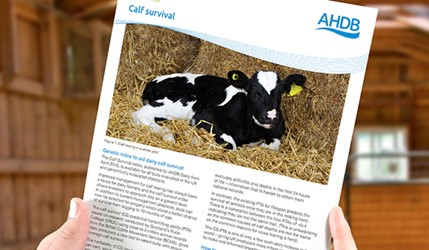 Calf Survival Index