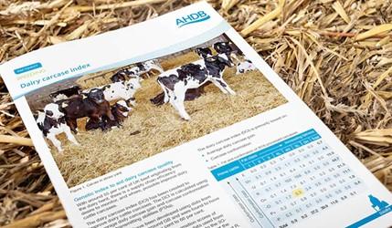 Dairy Carcase Index