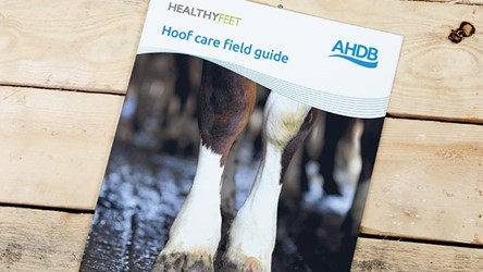 Hoof care field guide