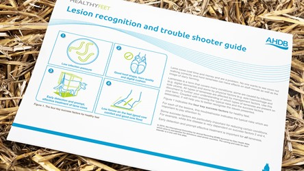 Lesion recognition and trouble shooter guide