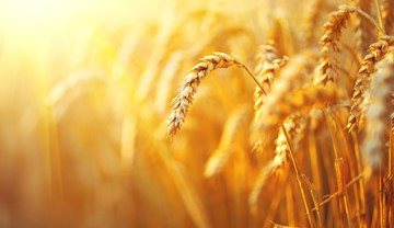 Agri market outlook June 2019 | AHDB