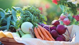 Organic food sales close to pre-recession levels