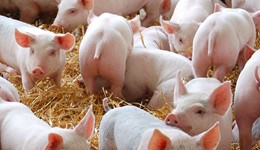 2016 Pig cost of production in selected countries