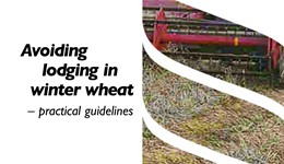 Avoiding lodging in winter wheat – practical guidelines