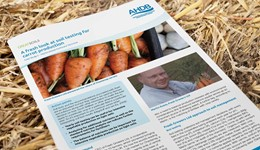 GREATsoils: A fresh look at soil testing for carrot production