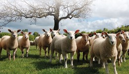 Growing and finishing lambs for Better Returns