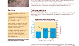 Improving oil content and minimising green seeds in oilseed rape