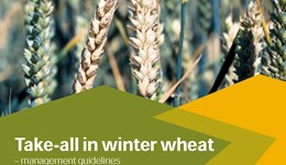 Take-all in winter wheat – management guidelines