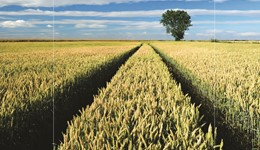 Understanding carbon footprinting for cereals and oilseeds