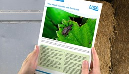 Vine weevil control in soft fruit crops