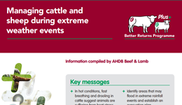 Managing cattle and sheep during extreme weather events
