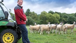 Reducing antibiotic use with Challenge Sheep