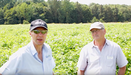 Drought 2018: Is it too late for nitrogen top-ups? (AHDB Potatoes)