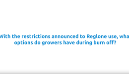 Drought 2018: Burn-off in dry conditions (AHDB Potatoes)