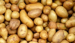 Industry Urged to Consider the Future of the Potato