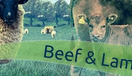 Webinar: Guide to the common gut and lung parasites of cattle