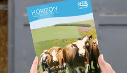 Horizon - What might Brexit mean for UK trade in beef and lamb products? - 17 January 2017