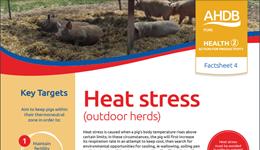 Heat stress - outdoor herds