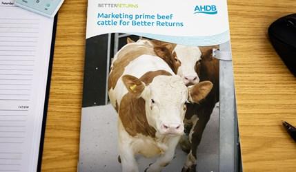 Marketing prime beef for Better Returns
