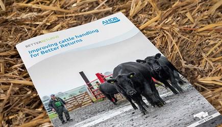 Improving cattle handling for Better Returns