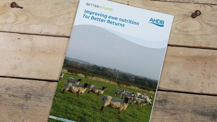 Improving ewe nutrition for Better Returns