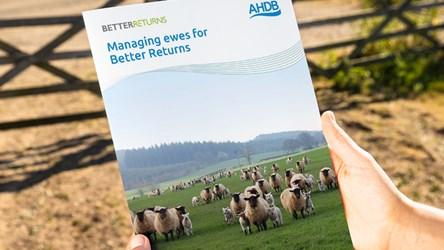 Managing ewes for Better Returns