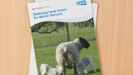 Reducing lamb losses for Better Returns