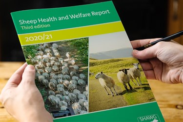 Sheep Health and Welfare report - Third Edition - 2020/21