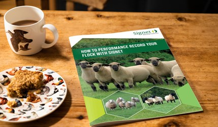 How to performance record your flock with Signet