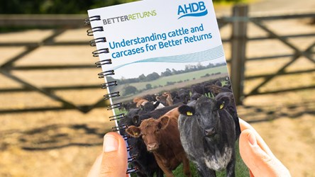 Understanding cattle and carcases for Better Returns