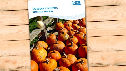 Outdoor Cucurbits Storage Review